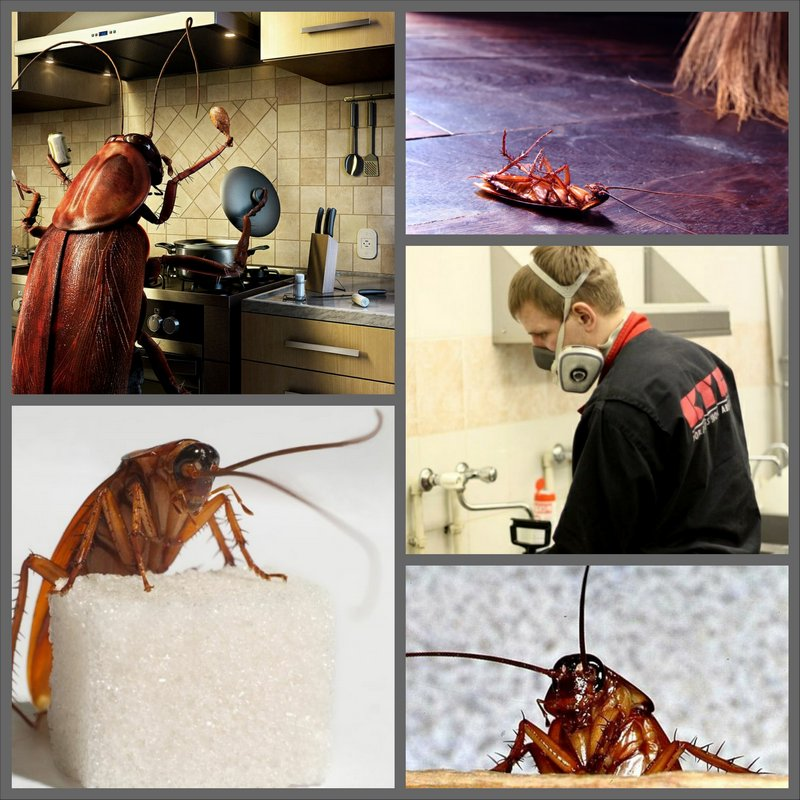 Травля тараканов в доме или квартире
