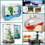 Морской аквариум в вашем доме
