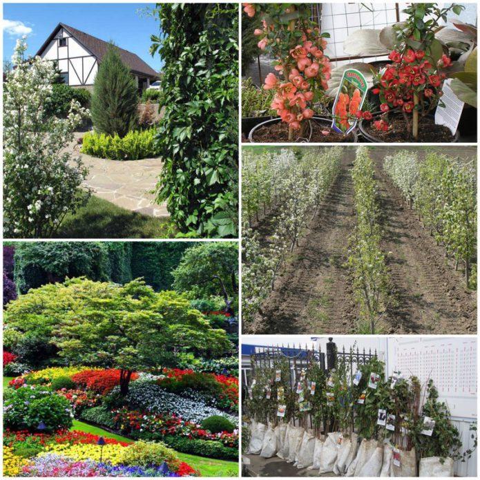 Выбираем посадочный материал для сада