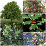 Деревья с ягодами в ландшафтном дизайне