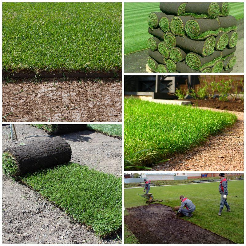 Рулонный газон и его особенности