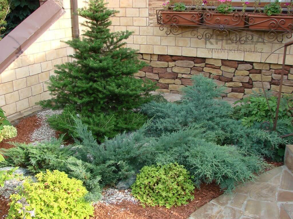 Хвойные растения - идеальный вариант для озеленения