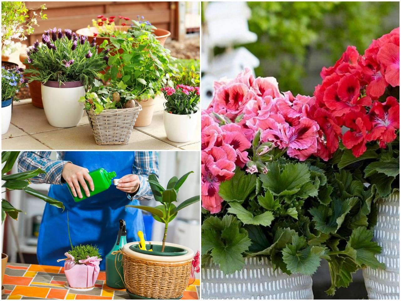 Польза закваски для растений