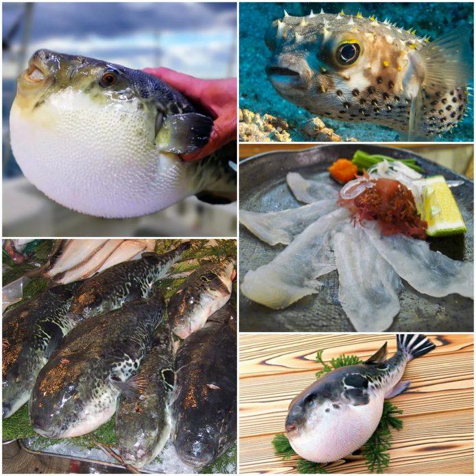 Рыба Фугу - опасное японское лакомство